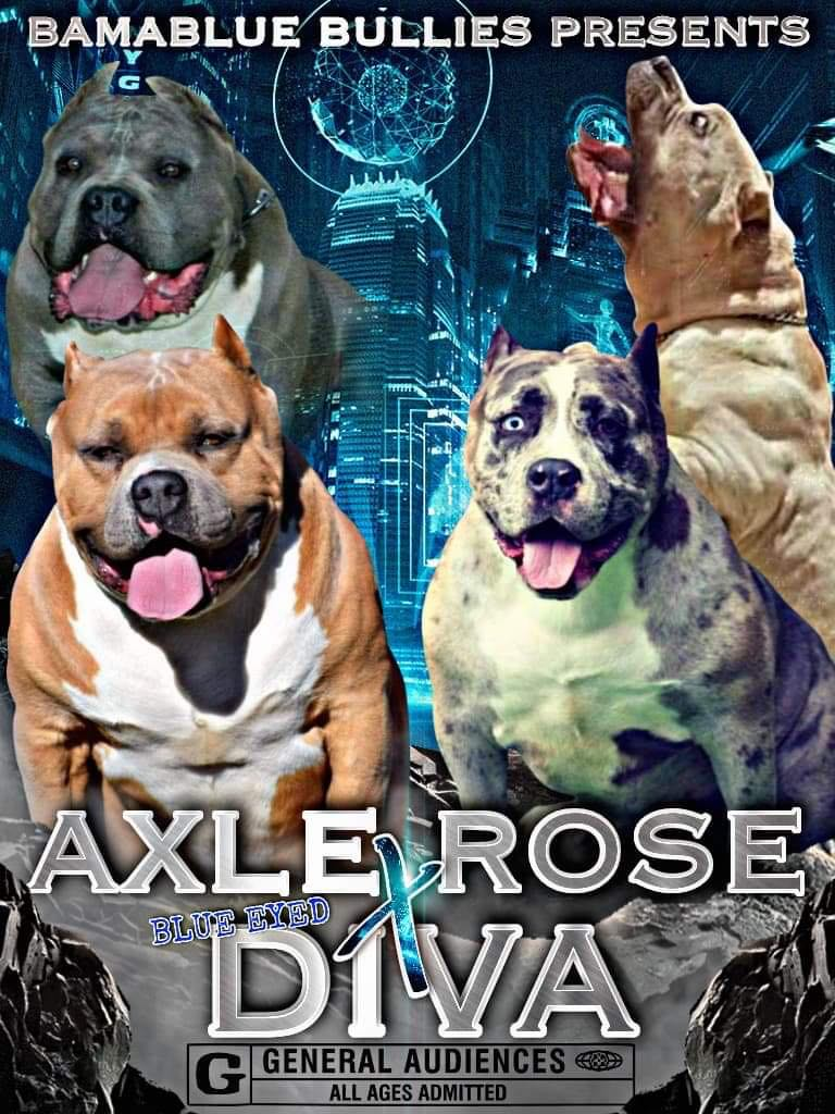 AXLE Rose X Blue Eyed Diva