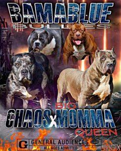 Chaos X Big Momma Queen
